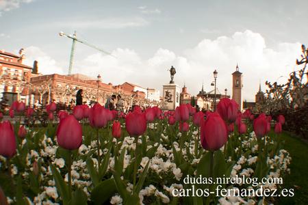 3. Tulipanes