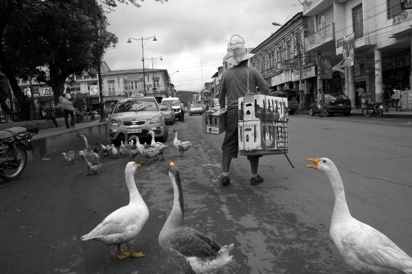 Patos, 19 enero 2012