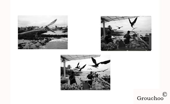 4. Aterrizajes en las Galápagos