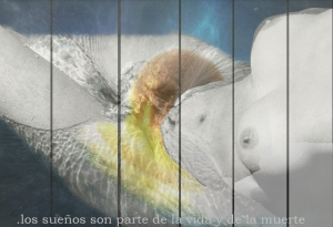 Collage de capturas de panta